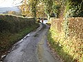 Hedged lane - geograph.org.uk - 447249.jpg