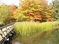 Herbst beim Ostlicher See (Autumn at the East Lake) - geo.hlipp.de - 29279.jpg