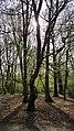 Highgate Wood 20170330 150154 (49400848096).jpg