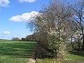 Holmfield Farmland - geograph.org.uk - 359330.jpg