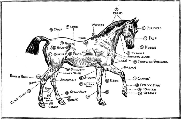 Horsemanship for Women 150.png