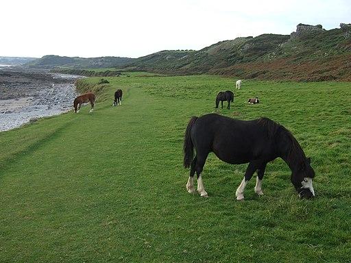 Horses at Holy's Wash, Port-Eynon Bay - geograph.org.uk - 1512889