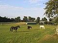 Horses at Houdshall - geograph.org.uk - 219461.jpg