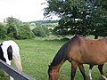 Horses in the countryside, Latimer - geograph.org.uk - 27980.jpg