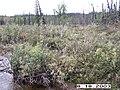 Hosford Creek Water Quality Testing, Yukon-Charley Rivers, 2003 2 (c486192f-c41e-455b-ac54-02076fb42384).jpg