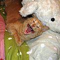 Housecat Yawning.jpg