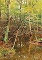 Hugo Darnaut - Woodland Stream.jpg
