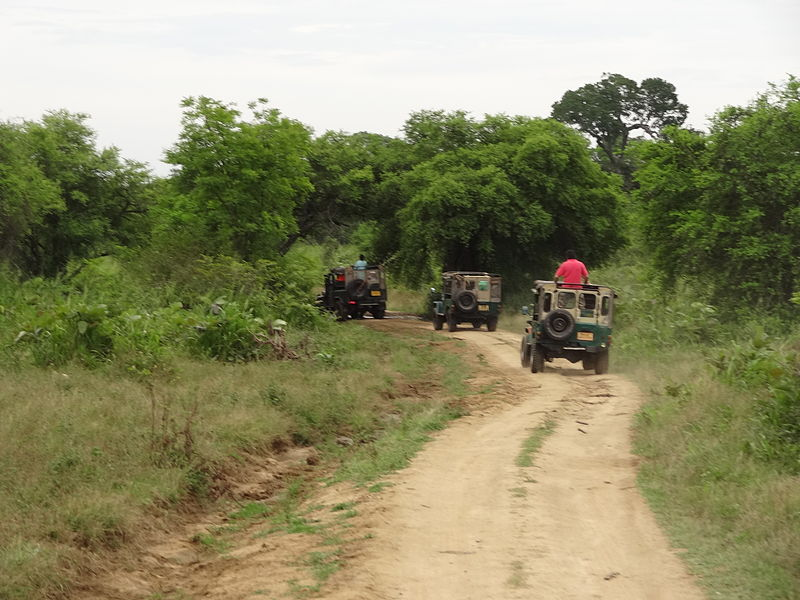 Jeep Safaris At Jaldapara Wildlife Sanctuary