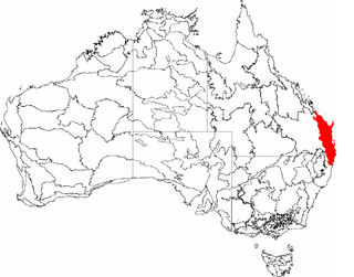 Bundjalung people Aboriginal Australian people of northern coastal New South Wales