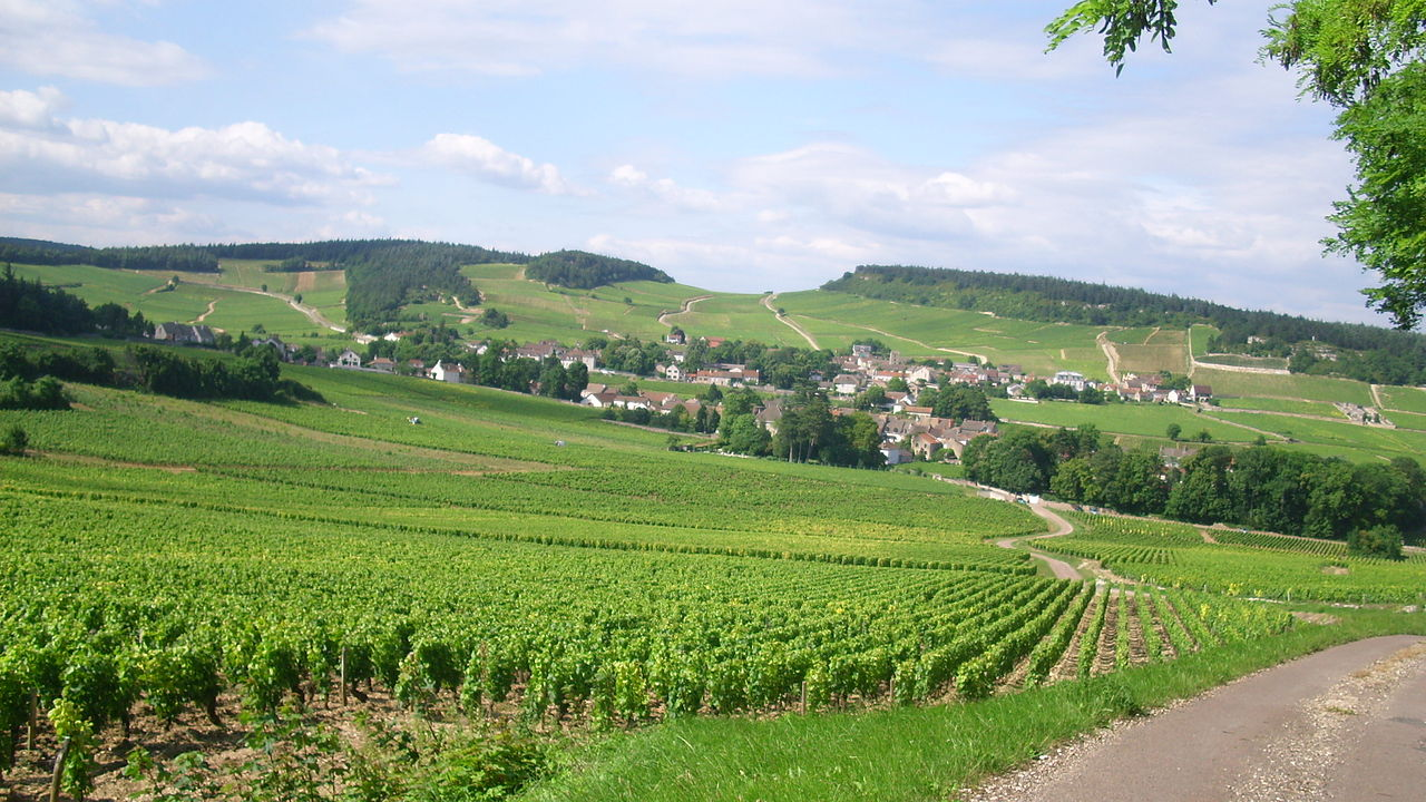 Champs De Vigne Plus Proche De La Ville D Epernay