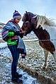 Icelandic Horses (16282110920).jpg