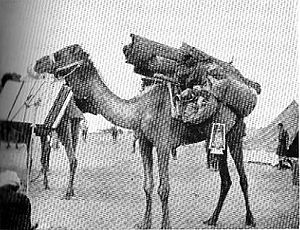 Egyptian Camel Transport Corps - Brigade Headquarters Office Ready for the Road