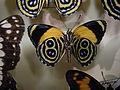 Insect Safari - lepidopteran 080.jpg
