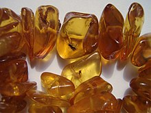Insects in baltic amber.jpg