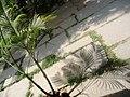 Isha Yoga Center, Salem, Tamil Nadu, India - panoramio (6).jpg