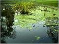 January Frost Botanic Garden Freiburg - Master Botany Photography 2014 - panoramio (20).jpg