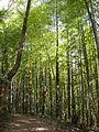 Japanese nature trees.jpg