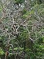 Jardim Santa Rosa, Itatiba - SP, Brazil - panoramio (6).jpg