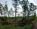 Josvainių miškas009.JPG