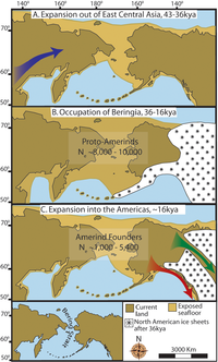 Three maps of prehistoric America. (A)  then gradual population expansion of the Amerind ancestors from their East Central Asian gene pool (blue arrow). (B) Proto-Amerind occupation of Beringia with little to no population growth for ≈20,000 years. (C) Rapid colonization of the New World by a founder group migrating southward through the ice free, inland corridor between the eastern Laurentide and western Cordilleran Ice Sheets (green arrow) and/or along the Pacific coast (red arrow). In (B), the exposed seafloor is shown at its greatest extent during the last glacial maximum at ≈20–18 kya [25]. In (A) and (C), the exposed seafloor is depicted at ≈40 kya and ≈16 kya, when prehistoric sea levels were comparable.  A scaled-down version of Beringia today (60% reduction of A–C) is presented in the lower left corner. This smaller map highlights the Bering Strait that has geographically separated the New World from Asia since ≈11–10 kya.