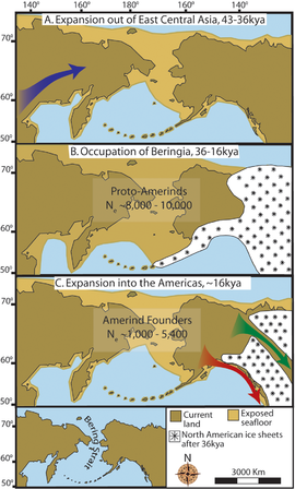 """Maps depicting each phase of the three-step early human migrations for the peopling of the Americas. (A) Gradual population expansion of the Amerind ancestors from their East Central Asian gene pool (blue arrow). (B) Proto-Amerind occupation of Beringia with little to no population growth for ≈20,000 years. (C) Rapid colonization of the New World by a founder group migrating southward through the ice-free, inland corridor between the eastern Laurentide and western Cordilleran Ice Sheets (green arrow) and/or along the Pacific coast (red arrow). In (B), the exposed seafloor is shown at its greatest extent during the last glacial maximum at ≈20–18 kya [25]; in (A) and (C), the exposed seafloor is depicted at ≈40 kya and ≈16 kya, when prehistoric sea levels were comparable. A scaled-down version of Beringia today (60% reduction of A–C) is presented in the lower left corner, this smaller map highlights the Bering Strait that has geographically separated the New World from Asia since ≈11–10 kya."""