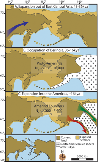 """Three maps of prehistoric America. (A) then gradual population expansion of the Amerind ancestors from their East Central Asian gene pool (blue arrow). (B) Proto-Amerind occupation of Beringia with little to no population growth for ≈20,000 years. (C) Rapid colonization of the New World by a founder group migrating southward through the ice free, inland corridor between the eastern Laurentide and western Cordilleran Ice Sheets (green arrow) and/or along the Pacific coast (red arrow). In (B), the exposed seafloor is shown at its greatest extent during the last glacial maximum at ≈20–18 kya [25]. In (A) and (C), the exposed seafloor is depicted at ≈40 kya and ≈16 kya, when prehistoric sea levels were comparable. A scaled-down version of Beringia today (60% reduction of A–C) is presented in the lower left corner. This smaller map highlights the Bering Strait that has geographically separated the New World from Asia since ≈11–10 kya."""
