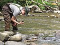 Joy Harrold loooking for macroinvertebrate stream animals (4948258582).jpg