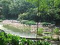 Jurong BirdPark 216.JPG