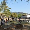 Kasuganocho, Nara, Nara Prefecture 630-8212, Japan - panoramio (12).jpg