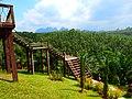 Khao Sok, 2014 December - panoramio (70).jpg