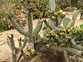 Kibbutz Sa'ad (479021175).jpg