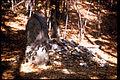 Kings Mountain National Park KIMO0966.jpg
