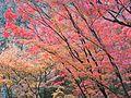 Kiyomizu-dera (24554181569).jpg