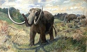 Mastodon.