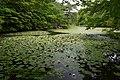 Kobe municipal forest botanical garden37bs4272.jpg