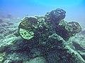 Korallen in Panama (27022762822).jpg