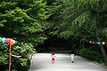 Korea-Gyeongju-Bulguksa-Children on the Road-01.jpg