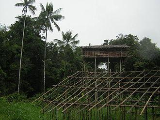 Korowai people - Image: Korowai Treehouse 5