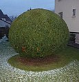 Kronach, Germany - panoramio (1).jpg