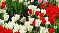 Kukkiahelsinkikesäsuomi5721475741751555904217.JPG