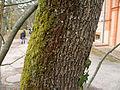 L'Union - Parc de Malpagat - 20110202 (3).jpg