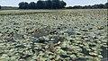 Lacul Beleu priveliște 29.jpg