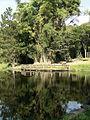Lago das carpas.jpg