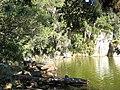 Lagoa do Peri - panoramio - Jeferson Felix (4).jpg