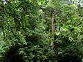 Lalashan Forest Reserve 拉拉山森林保育區 - panoramio (1).jpg