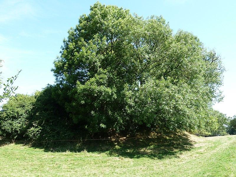 Motte te Sinte-Gitter, Landen, België