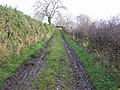 Lane, Errigle - geograph.org.uk - 1046820.jpg