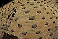 Las conchas (4749900653).jpg
