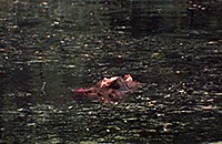 Woman floating in a lake