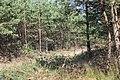 Lasy Łączańskie - panoramio (10).jpg